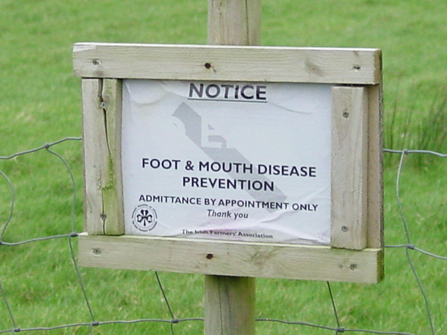 Foot and Mouth